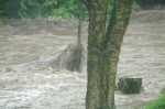10:47AM 8/28/11, Pinney Hollow Brook, Route 100A Plymouth, by Jen and Jay Flaster